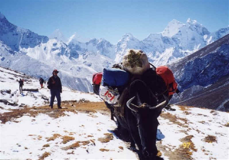 Trekking from Dingboche to Dugla - Khumbu Valley Everest Base Camp