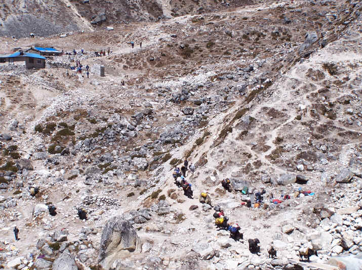 Trekkers and yak team to Everest base camp
