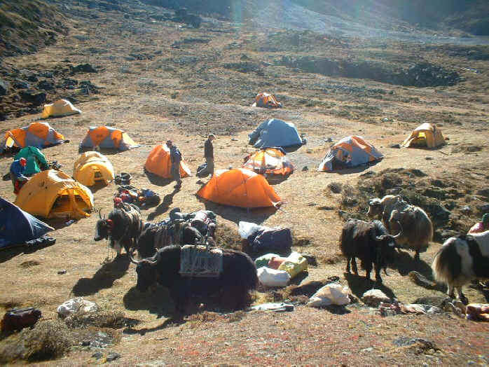 Ama Dablam base camp yaks